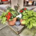 Pocono Bed and Breakfast flower pot